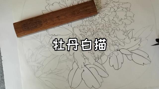 扇形工笔牡丹白描底稿