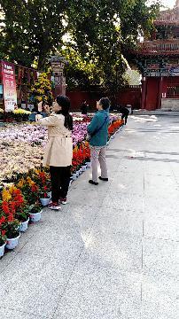 洛阳王城公园国庆节金秋菊展,花开满园