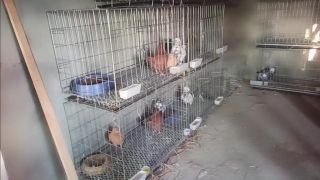 农村屋顶养鸽鸽笼图片