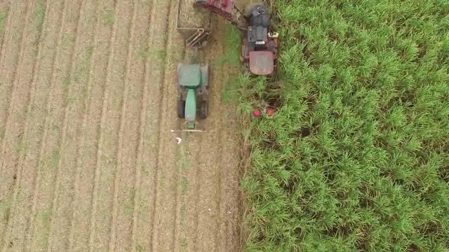 甘蔗收割机工作过程,像推子一样剃掉甘蔗_网易视频