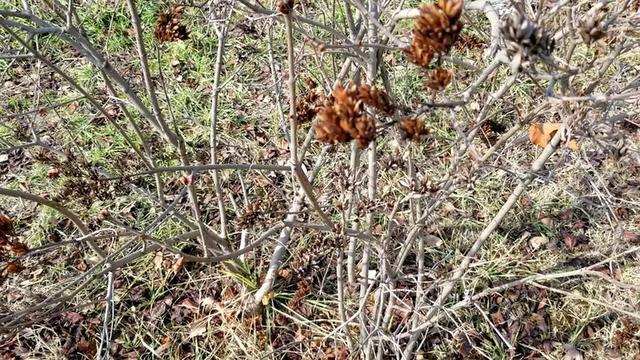 冬天也不落叶的乔木树 你留意到了吗?最后有答案