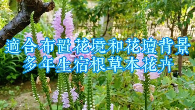 花卉简笔画