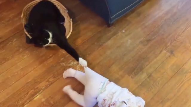 小宝宝把小猫咪的尾巴拿了起来放进嘴里咬,猫咪瞬间转过头来