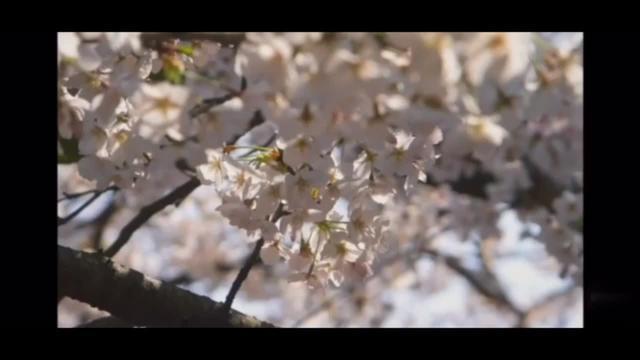 (TokyoBon)东京(盆踊り)盆舞舞蹈2020~~