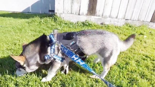 最新杂交犬种