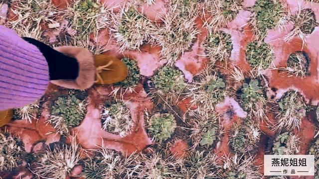 荆棘之路 - 狐小沫 - 单曲 - 网易云音乐