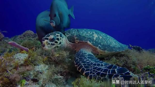 200斤大海龟惊现浙江海滩,发现时已死亡,四个壮汉将它抬上岸