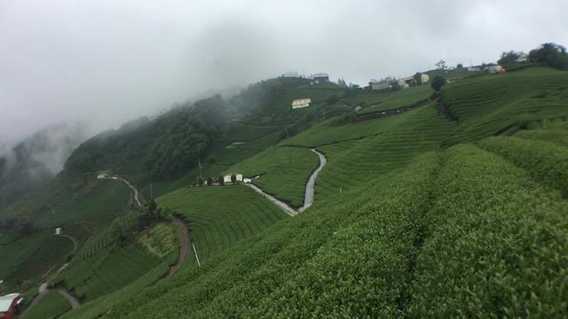 海拔最高产量少 带你认识台湾梨山茶区_手机搜狐网