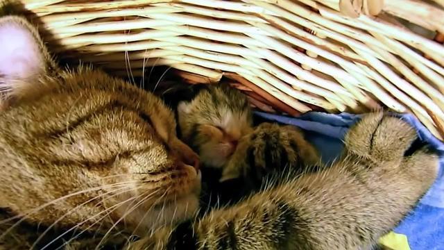 情侣猫咪手机壁纸