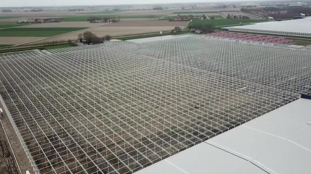 农村搭建蔬菜大棚,一亩地成本多少钱?听完别吃惊