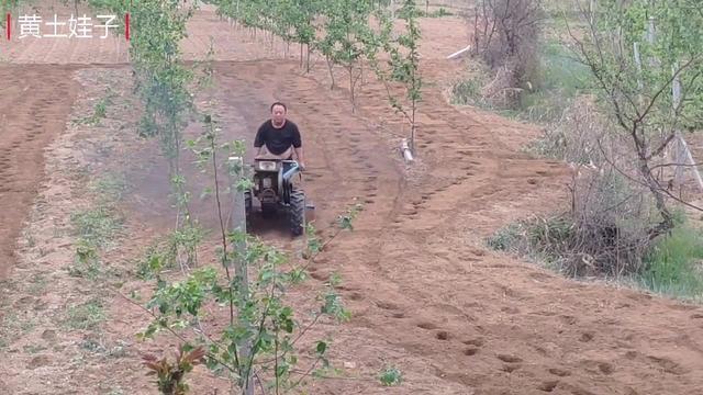 俄罗斯小伙开小型手扶拖拉机耕地, 一个犁效果也不错!