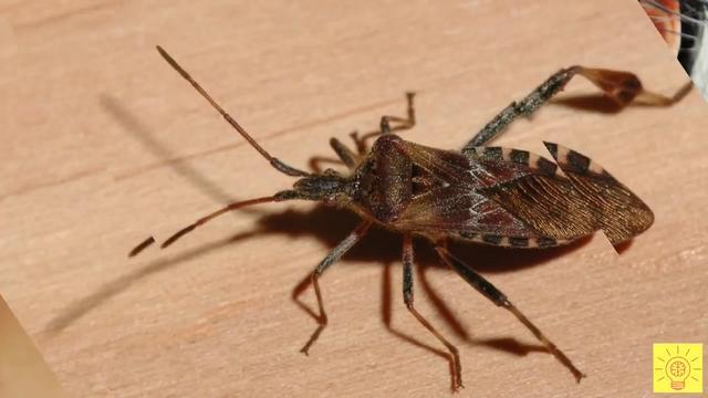 10种危险昆虫,一般人不要轻易招惹!