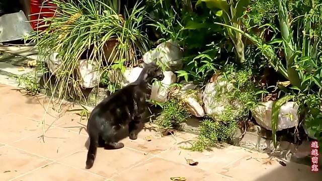 猫抓老鼠图片