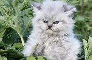 愤怒的小宠!当你家动物生气的时候,是不是就是这样的?