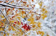 跪求一篇2015年第一场雪的散文