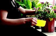 改良土壤的花有哪些