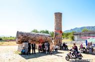 两棵非洲原始森林原木:国人花巨资买来展示,呼吁保护自然引争议