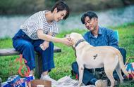 《小Q》重磅催泪上映,又一部感人的导盲犬电影,任达华实力出演