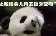熊猫在历史是如何记载的,成为国宝的原因是?