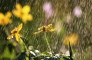 描写大人在雨中洗澡的句子