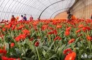 义县:多措并举壮大特色产业 加快乡村振兴步伐