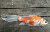 对于观赏鱼的死亡问题,人为的因素多,还是不可预测的因素多?