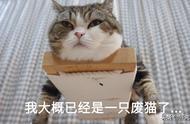 日本网友测试猫趴在地上可以有多扁,看到最后快被萌死了