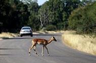 开车撞死动物,究竟应该怎么处理你知道吗?