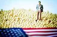 美大豆因雨水过多损失惨重,豆农吐露心声,想跟中国长期稳定合作