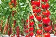 做农业项目政府给企业有哪些优惠政策