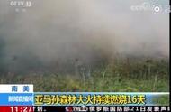 亚马孙森林大火已持续燃烧16天 已致至少50万公顷森林被毁
