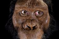 420万年前人类直系祖先面貌复原!比肯尼亚的露西老100万岁