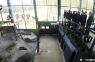 芬兰动物园给大熊猫过中秋节,请来合唱团演唱中文歌曲《明月几时有》