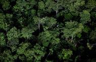 曾经郁郁葱葱,如今只剩满眼荒芜,亚马逊雨林40年毁坏两成!