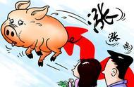 2019猪肉价格还会上涨吗?猪肉包子和牛肉包子一个价,且吃且珍惜