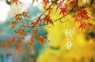 秋分已至,这几首经典的秋分诗词,每一首都美到窒息,千年不衰