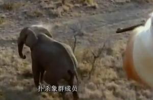 人类与大象的争斗,地球陆地最大巨兽的悲惨遭遇