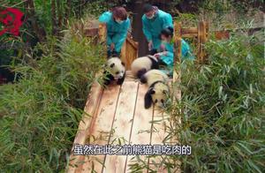 为什么狮子和老虎不捕食大熊猫?熊猫的另外名字,你大概没听过!