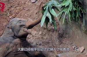大象不小心掉入化粪池,为了食物竟不肯上来了,居民实在太无奈!