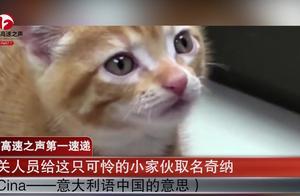 """最可爱""""偷渡者""""!中国小橘猫误关集装箱运米兰,弱小可怜又无助"""