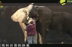 饲养员与大象如同亲人,但不管大象多平静,危险仍然可能不期而至