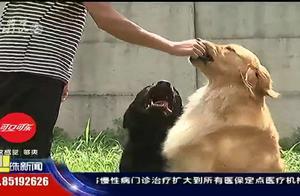 狗主人拖欠狗狗寄养费十多万,寄养方无奈只能告上法庭,进行拍卖