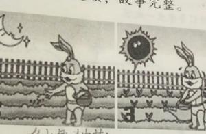 小学二年级看图写画小白兔种白菜120字