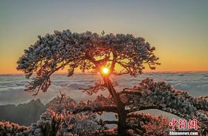 黄山云海、日出、雾凇多景齐现 壮丽景观美如画