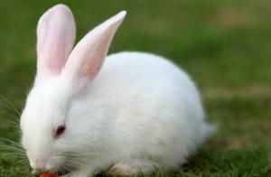 做梦梦见自己是一只兔子意味的什么