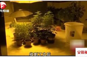 毒窝藏得深!毒贩租下整栋民宅种大麻,现场烘干打包供货全国