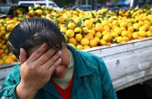 极端气候!菲律宾数百万斤芒果滞销,吃货网友:给我我都吃完