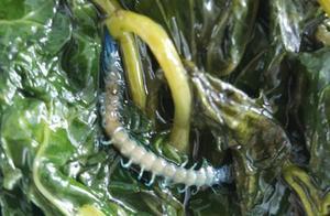 """外卖吃到一半发现虫子 店家称是菜虫""""很正常"""""""