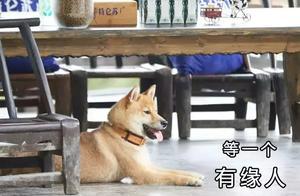 吃饭机器瓢哥终于被领养了!王珞丹:为什么大家都在心疼我?