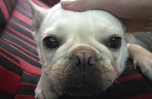 养狗常遇到的一些小问题及处理方法